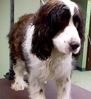 Prison Dog Project